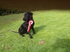 Harriet Stapelton after finishing puppy training
